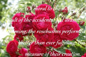 lessons_from_the_rose_garden1